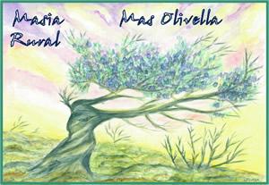 web Mas Olivella